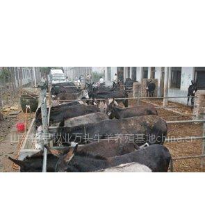 供应肉驴价格|肉驴良种|养驴效益|大型肉驴养殖场