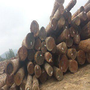 重庆木方_价格合理的木方,厂家火热供应