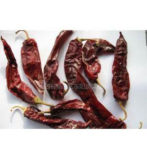 大量的辣椒干 益都红 金塔 线椒等