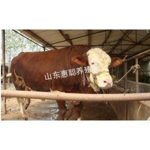 供应江西有肉牛养殖场吗