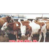 西门塔尔绵羊肉驴肉马养殖基地