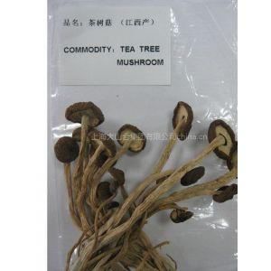 供应食用菌食用菌批发茶树菇茶树菇批发