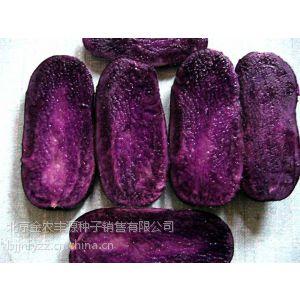 一级优质高产脱毒土豆种子黑美人黑土豆种子