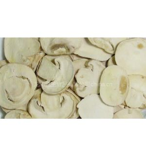 供应冻干双孢菇片 冻干洋菇片 冻干蘑菇片 冻干香菇丁