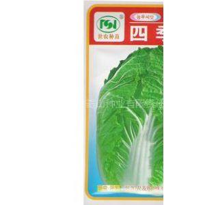 供应四季王韩国大白菜种子
