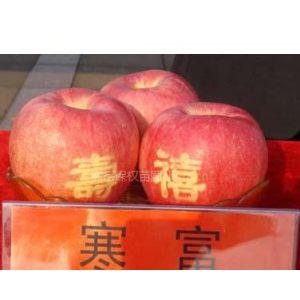 供应出售各种苹果树苗