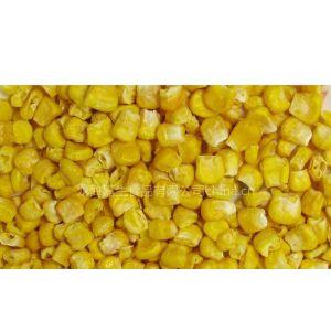 供应供应冻干甜玉米 冻干玉米 冻干玉米粉冻干玉米片 FD玉米