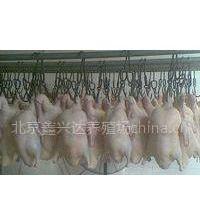 大量供应白条鸭鲜鸭坯填鸭