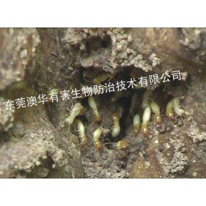 供应东莞市澳华白蚁防治是一家除四害专业除四害公司