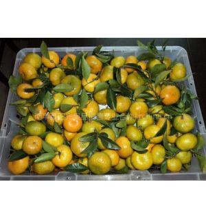 南丰蜜桔------一级鲜果
