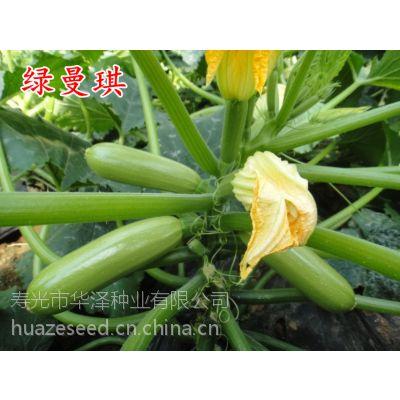 供应高产早熟西葫芦种子—绿曼琪