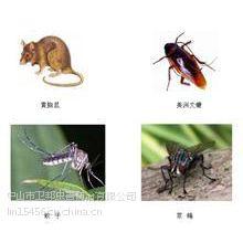 供应中山杀虫灭鼠白蚁防治灭蟑除蝇