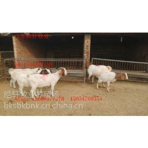 供应章丘市波尔山羊-山羊-白山羊-肉羊-怀孕-羊羔-种羊-小尾寒羊-杜