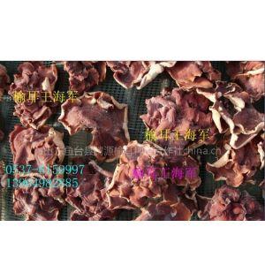 供应食用菌榆耳 红榆耳