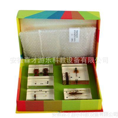 标本 科学实验室仪器标本 儿童教学标本 幼儿实物标本