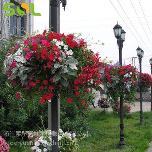 供应圆形吊盆式灯杆花盆卡盆 时尚创意 道路绿化工程 黑色 060