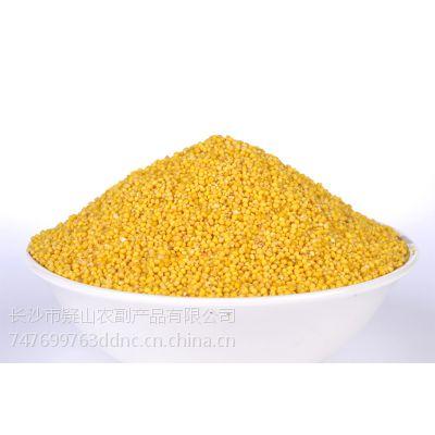 供应产地直销 大地农仓 五谷杂粮 小米 小米批发 糯小米批发 小米价格