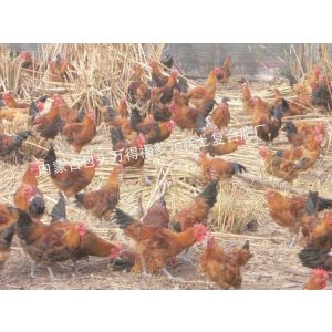 鸡饲料多元稀土营养剂