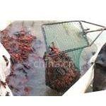 供应先进泥鳅养殖技术 泥鳅养殖高产有保障