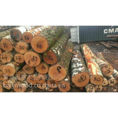 进口桦木原木,俄罗斯桦木原木,欧洲桦木原木白桦直径20cm以上