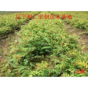 供应花楸、花楸基地、辽宁花楸、桓仁花楸、花楸小苗、花楸种子