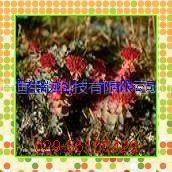 供应红景天提取物 抗衰老(西安瑞迪生物)