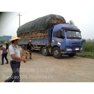 供应专业供应优质稻草