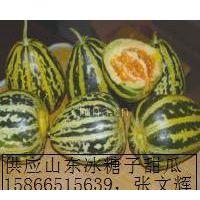 供应潍坊甜瓜价格