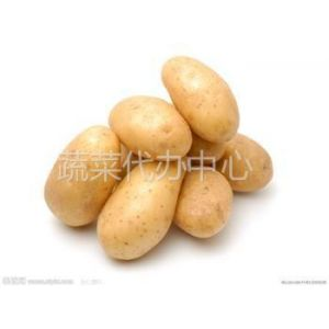 供应供应新鲜优质出口级荷兰系列土豆