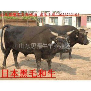 供应广东梅州肉牛养殖场(一头肉牛一天吃多少钱
