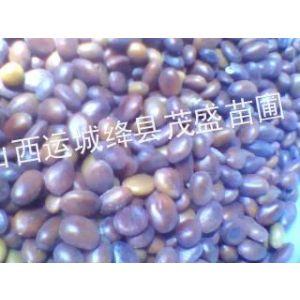 供应皂角籽 小皂角籽 大皂角籽
