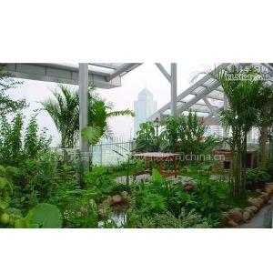 供应深圳屋顶花园植物搭配设计