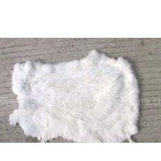 供应常年供应销售优质兔皮-15005381235