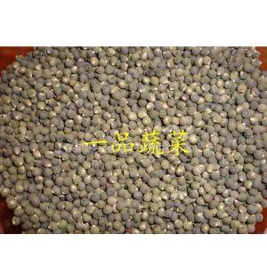供应日本原种繁育一代黄秋葵种苗品种齐全