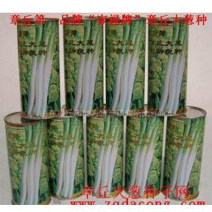 供应章丘大葱种 高产  新品种 家禄三号 大葱种子 章丘大葱种子网