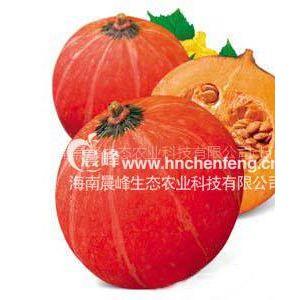供应南瓜种子-金红栗南瓜种子