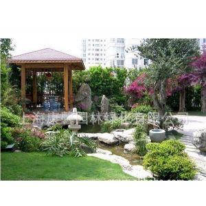 供应上海别墅绿化 上海绿化养护 上海防腐木设计制作 供应上海绿化苗木