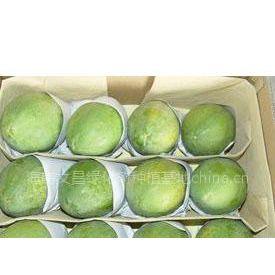 大型台湾日昇木瓜基地,寻实力经销商长期合作 (外观美口感甜特优品种)