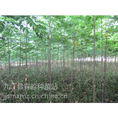 批发3公分栾树、4公分栾树、5公分黄山栾树价格