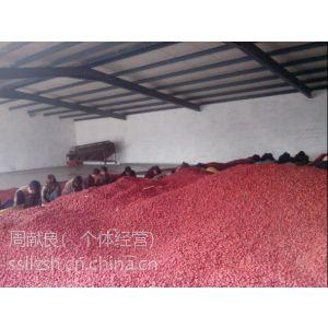 供应产地直销优质乐陵红枣(金丝枣)