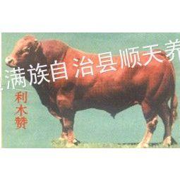 供应种牛配种/顺天养殖场供/利木赞牛/种牛配种