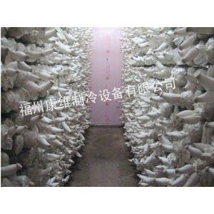 供应福州冷库,福州金针菇冷库安装,福州食用菌冷库安装建设