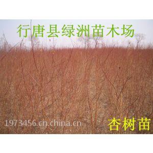 河北省哪有占地杏树苗