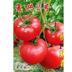 供应抗TY病毒番茄种子 复兴2号