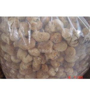 供应猴头菇