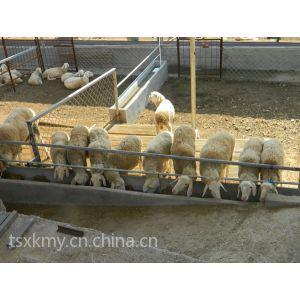 供应小尾寒羊养殖 科学化小尾寒羊