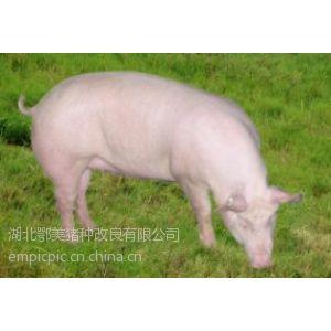 供应重庆梁平新建商品猪场目录,新建猪场财政补贴项目