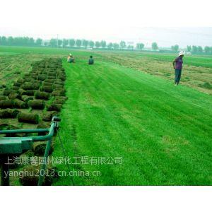 供应上海常绿草坪/上海小型绿化养护价格/花园绿化养护