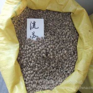 供应供应白蜡种子价格 白蜡种子种植技术 苗木种子批发  白蜡种子