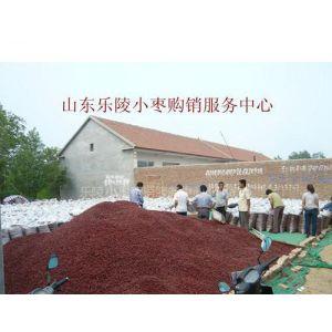 供应乐陵红枣供应商金丝小枣价格